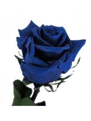 Amorosa Premium Blauw