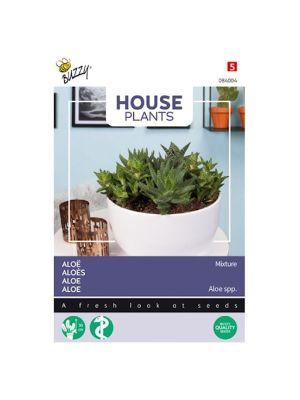 Buzzy House Plants Aloë gemengde soorten