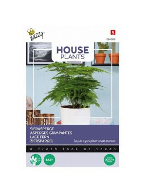 Buzzy House Plants Asparagus, Sierasperge