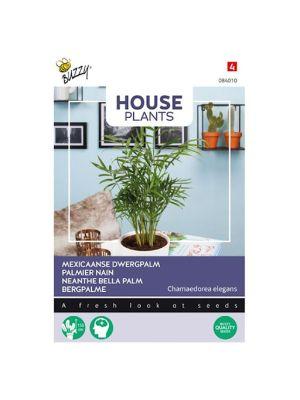 Buzzy House Plants Chamaedorea, Dwergpalm