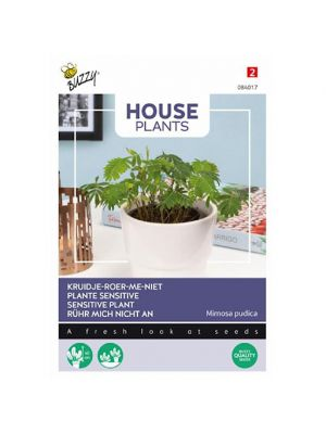 Buzzy House Plants Mimosa pudica, Kruidje roer me niet