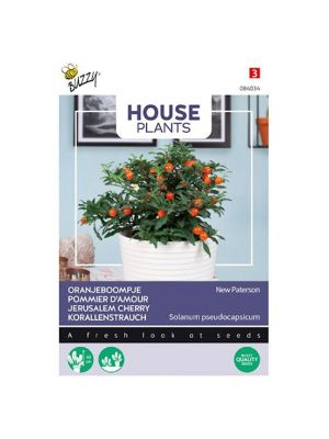 Buzzy House Plants Solanum, Oranjeboompje Jubilee