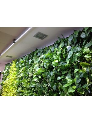 Linear-Spot-LED GREENWALL 120cm, 120º, 75Watt, tbv Living-Wall
