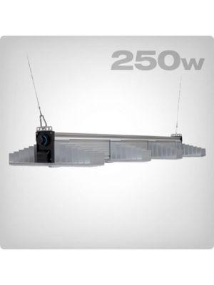 SANlight EVO 4-100 250W