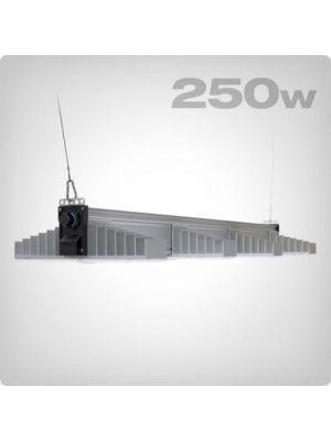 SANlight EVO 4-120 250W
