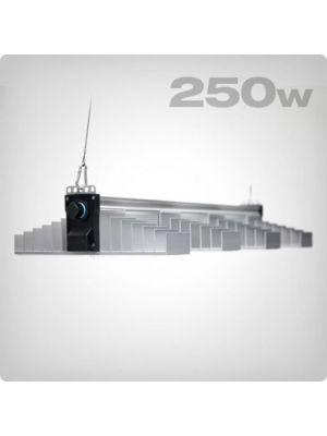 SANlight EVO 4-80 250W