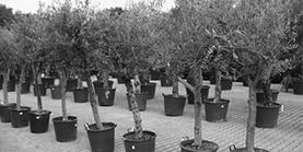 Bomen & Planten